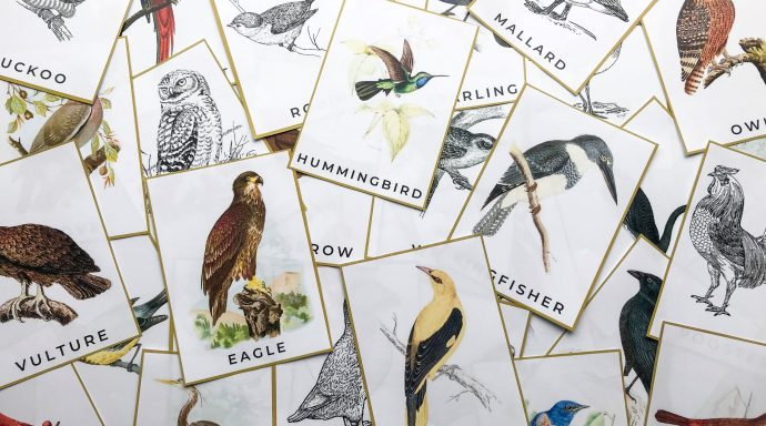 Colorful Bird Nature Study Flashcards